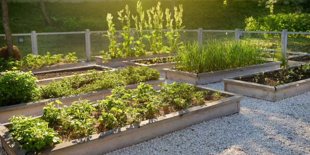 raised garden beds on gravel