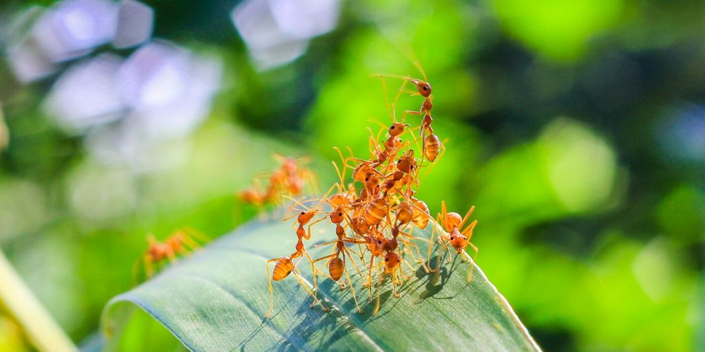 red ants on a leaf