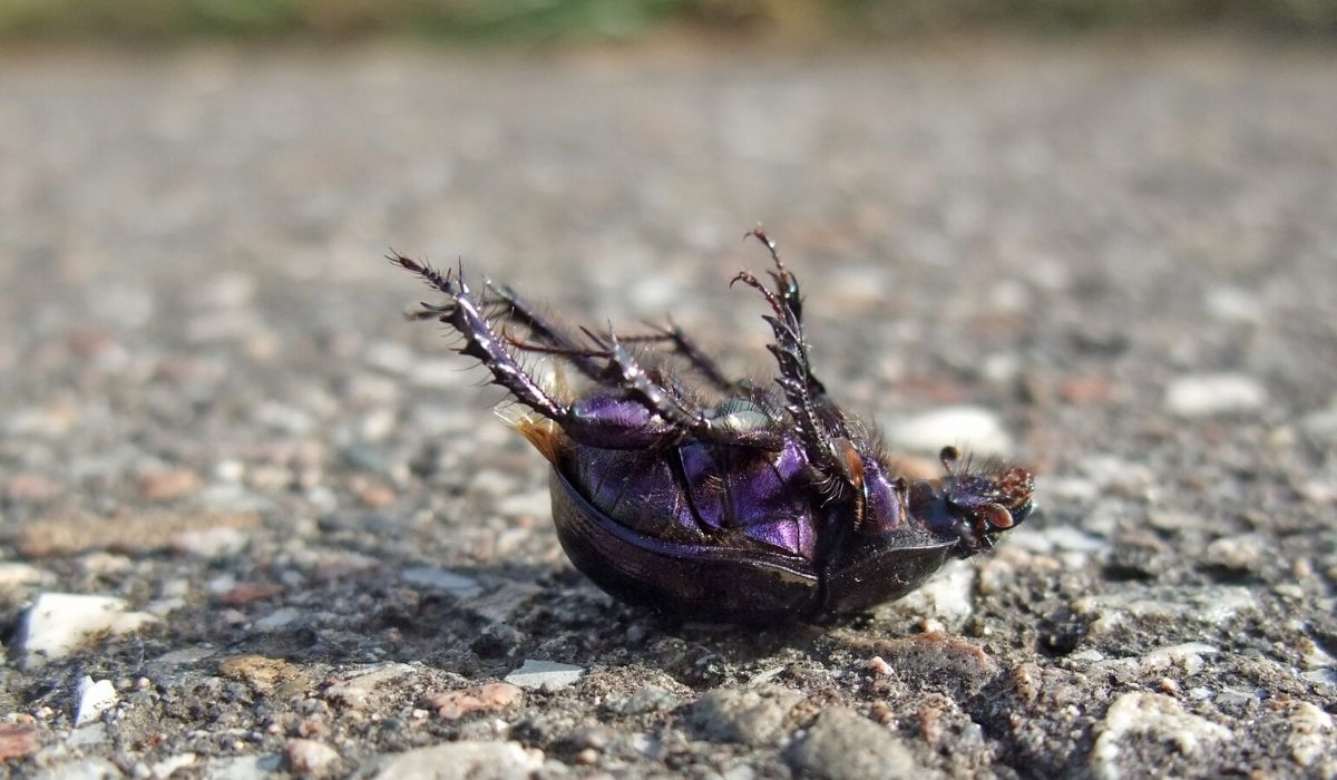 dead bug laying on its back