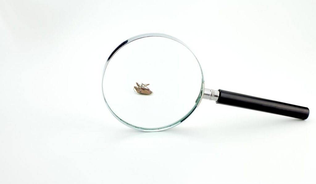 dead bug under magnifying glass