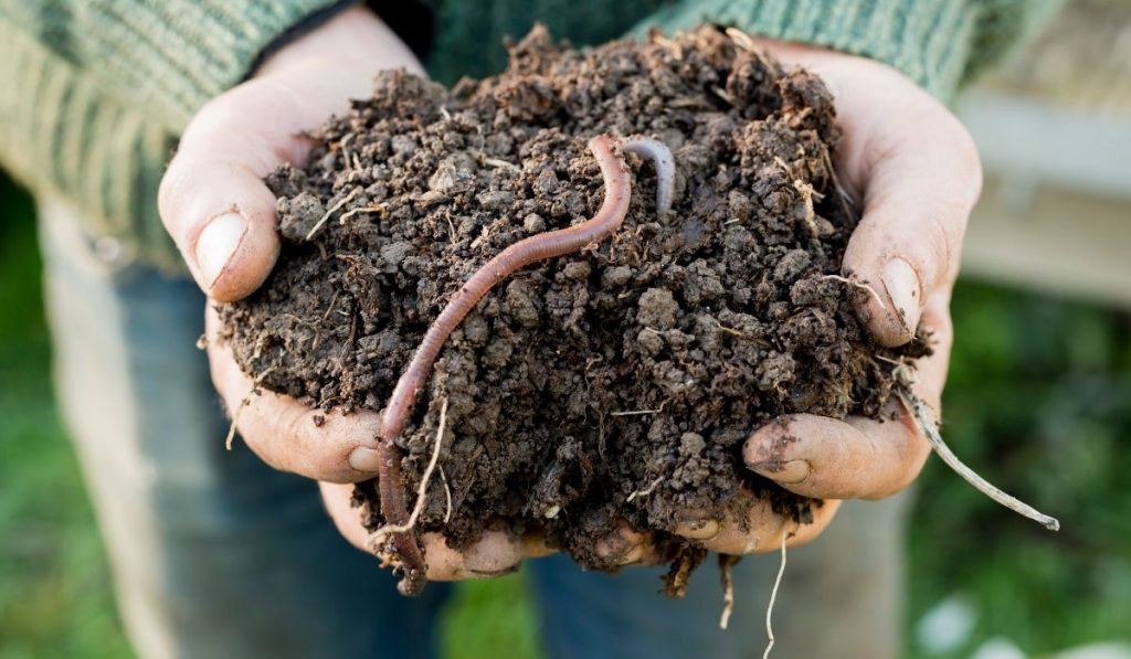 handful of soil with earthworms