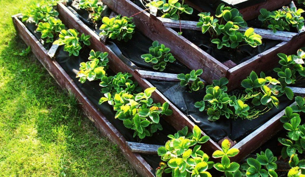 landscape fabric raised garden liner