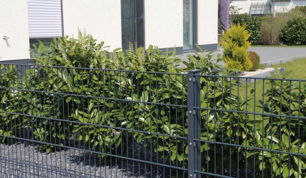 modern steel garden fence