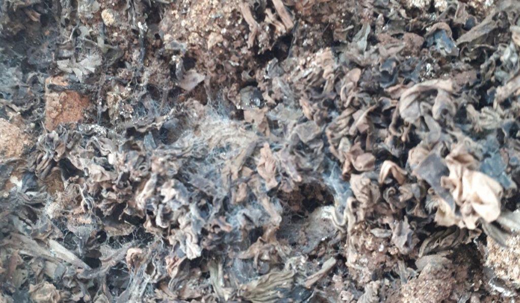 moldy garden soil