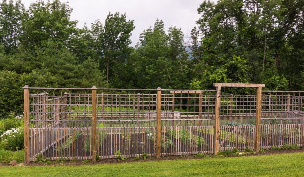 vegetable garden fence deer height