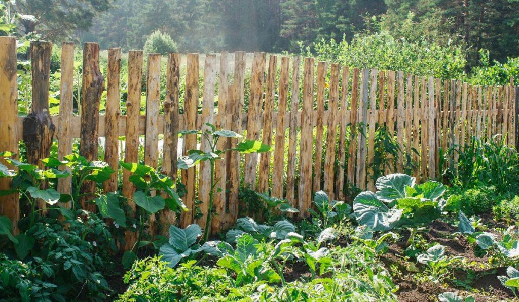 wood vegetable garden fence
