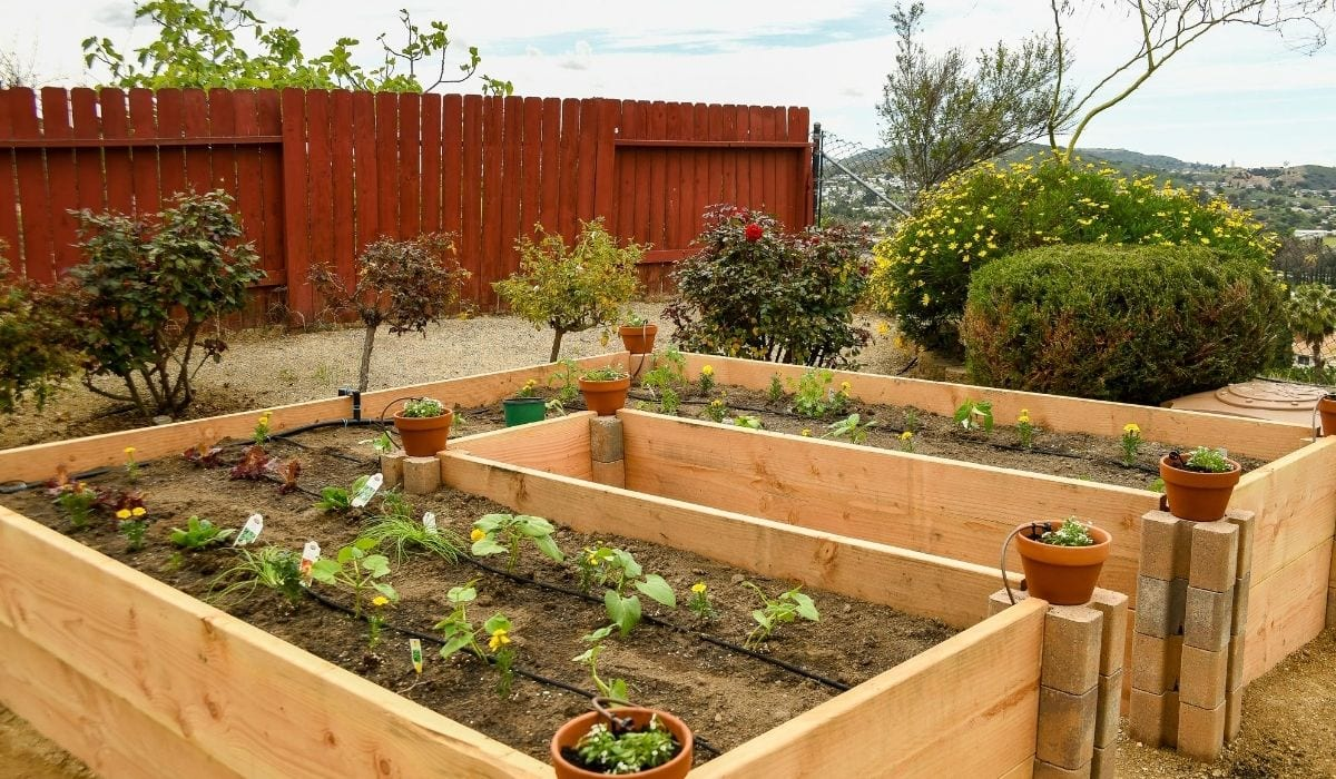 Raised beds garden with wooden frame