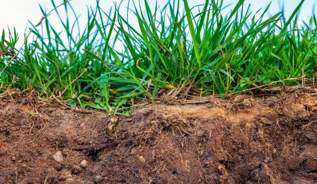 cutaway view of topsoil