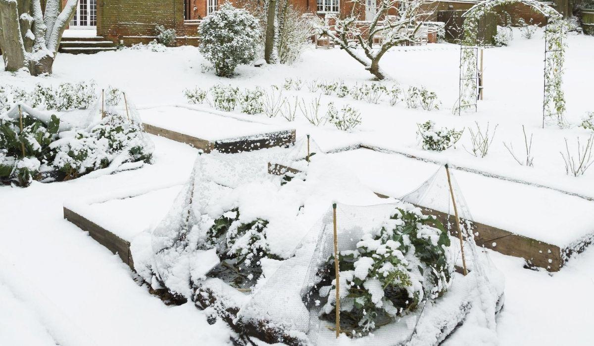 frozen raised bed garden
