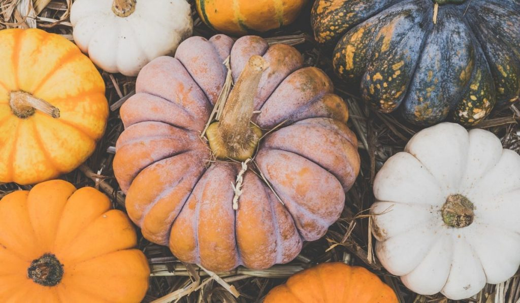 fun varieties of pumpkin