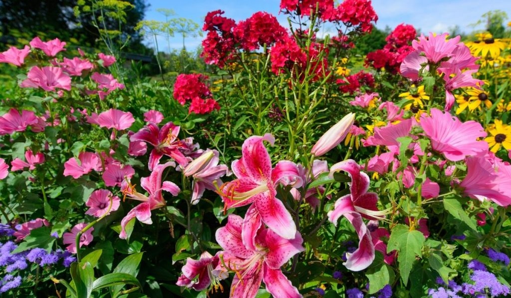 perennial flowers in a raised bed