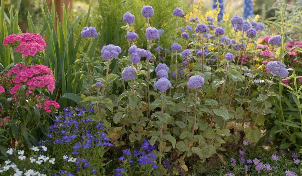 perennial flowers in a raised bed garden