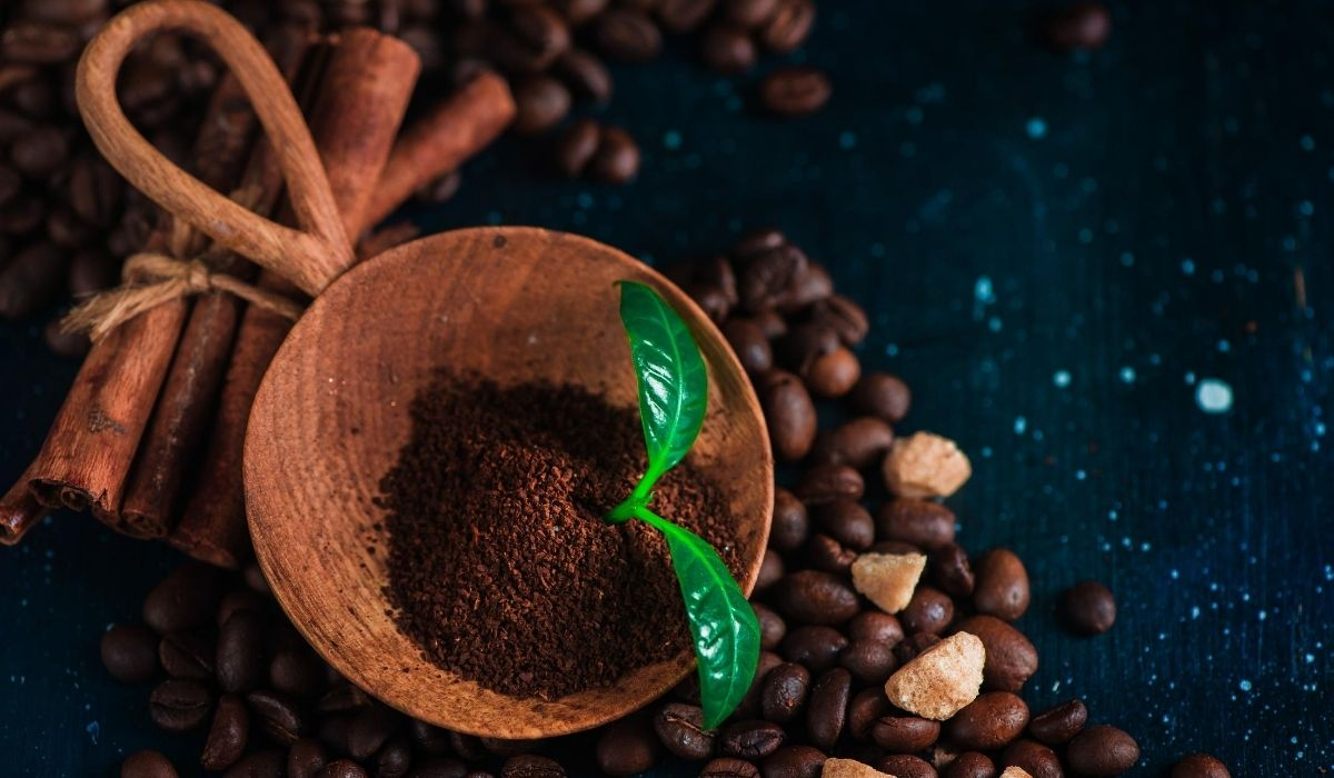 plant in coffee ground