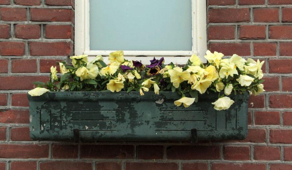 planter box in a window