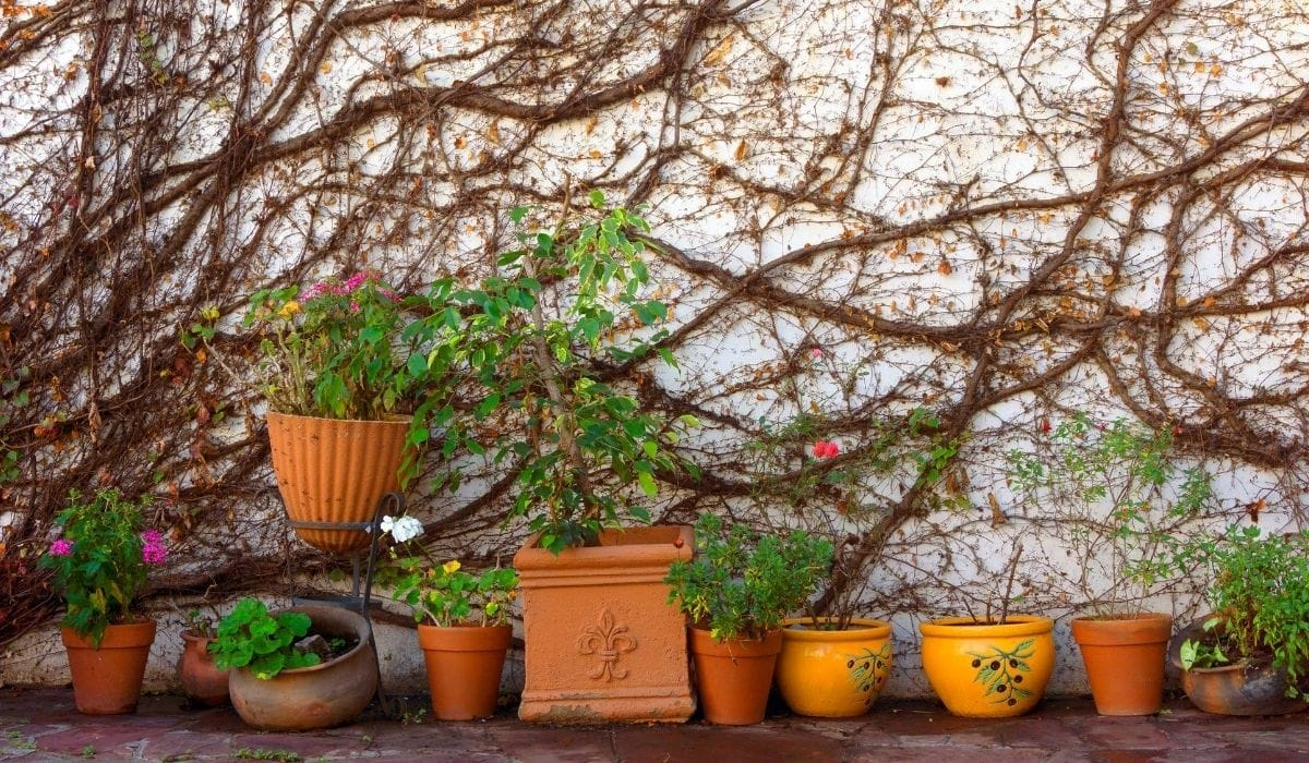 plants in pots of different sizes