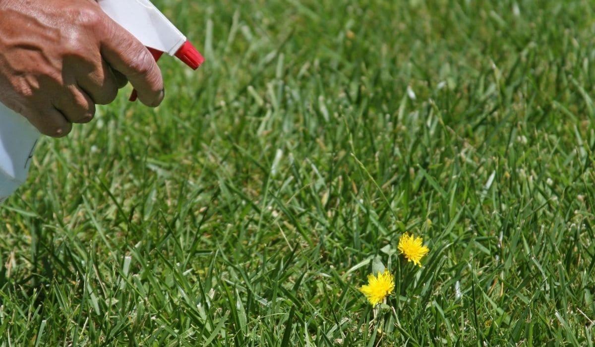 spraying the weeds