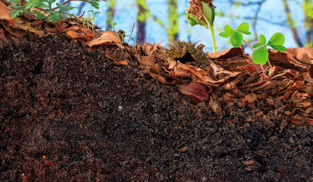 stinky topsoil under a bed of leaves