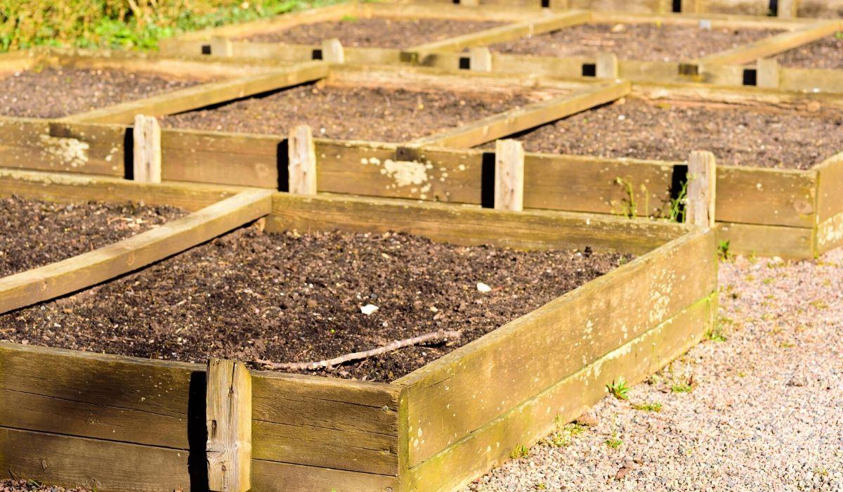 sunlight rays to raised bed garden soil
