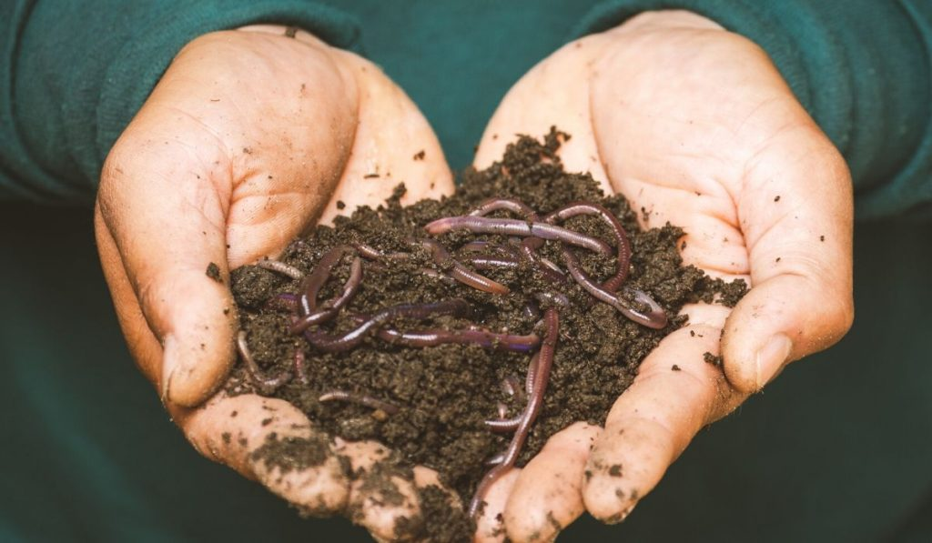 worms in potting soil