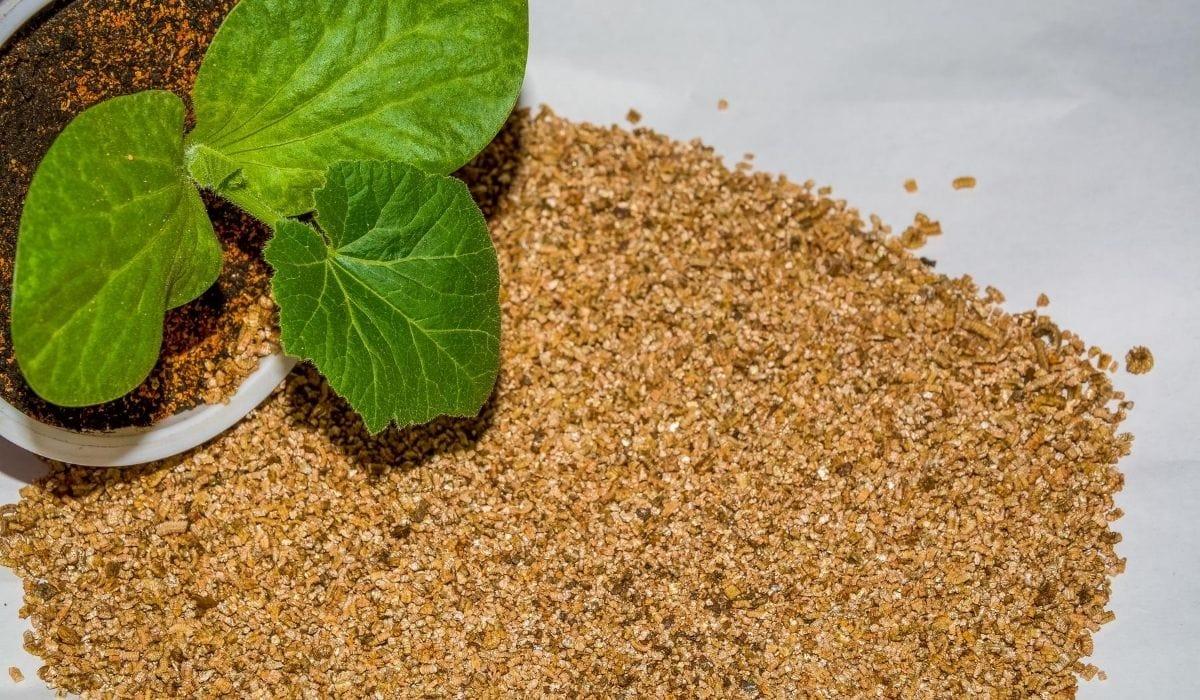 plant and fertilizer