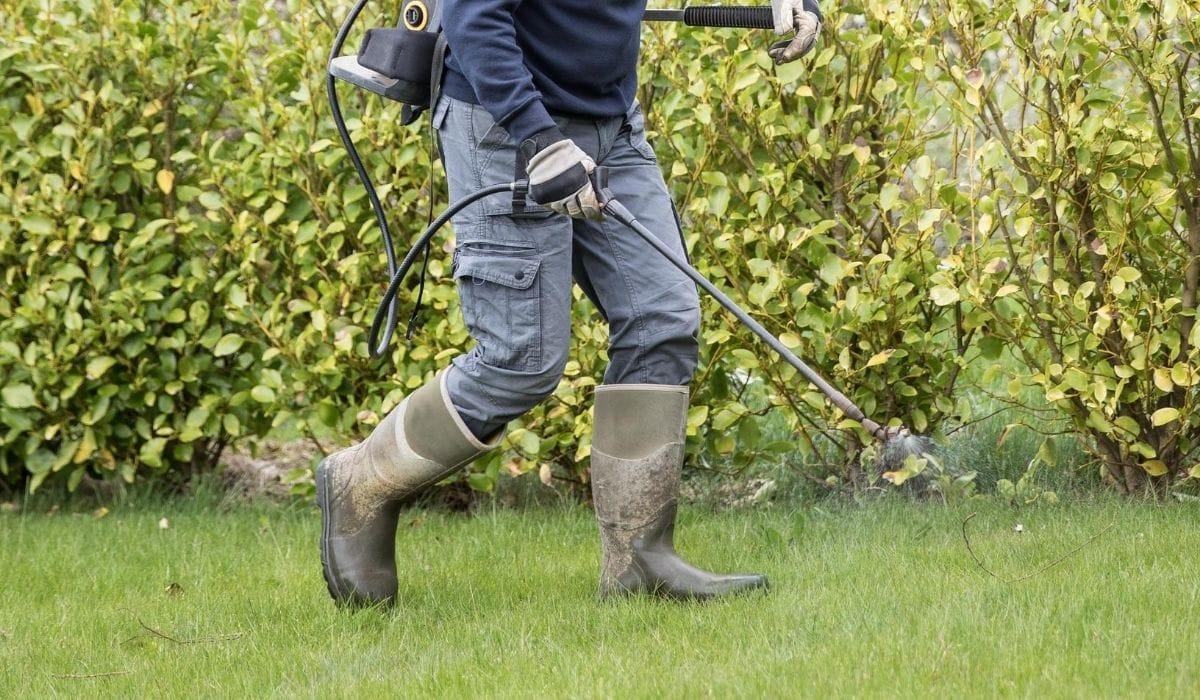 spraying diesel to kill grass