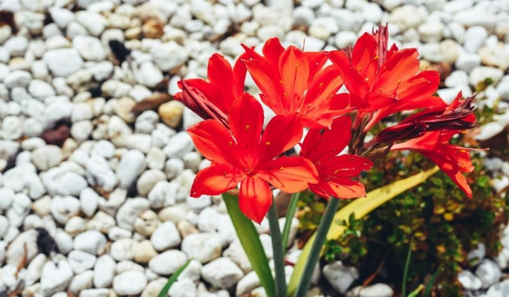 Plant in Pebbled Garden