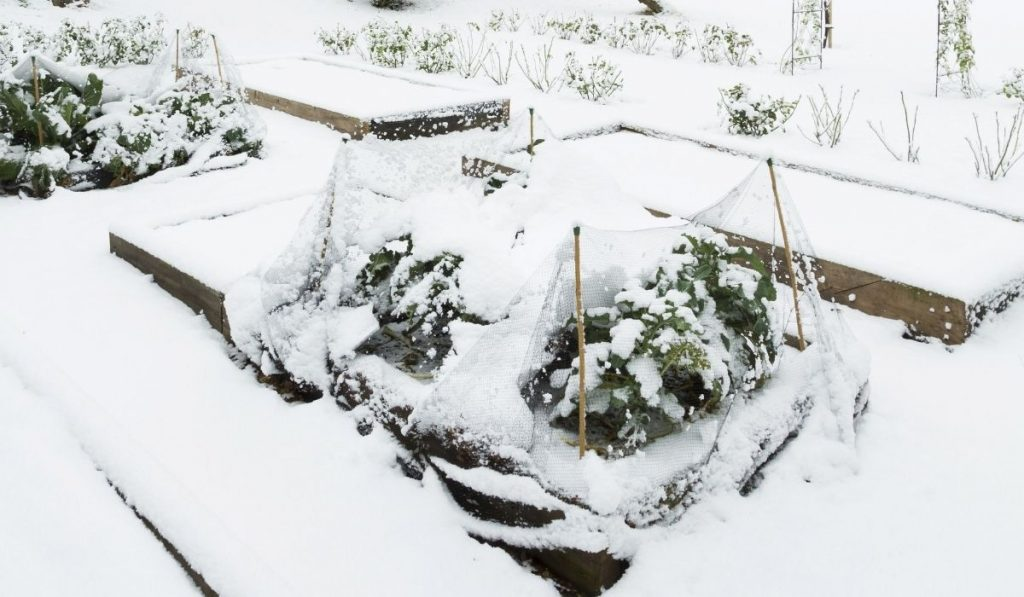 Raised bed garden covered in snow