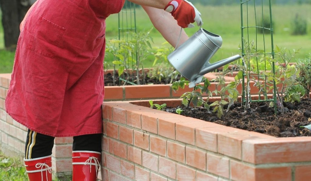 Watering the plants in raised bed