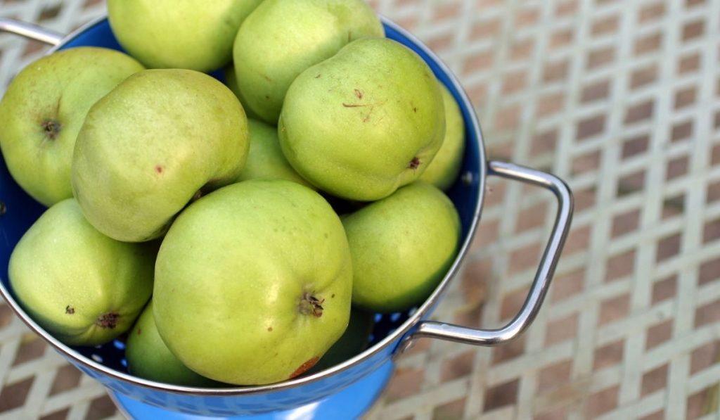 Grenadier apple