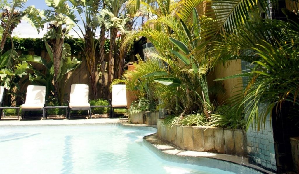 Cane Palm at  Swimming Pool