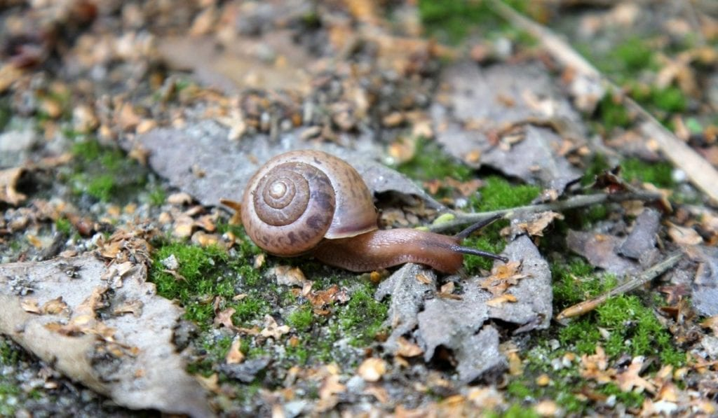 Control the Population of Garden Snails