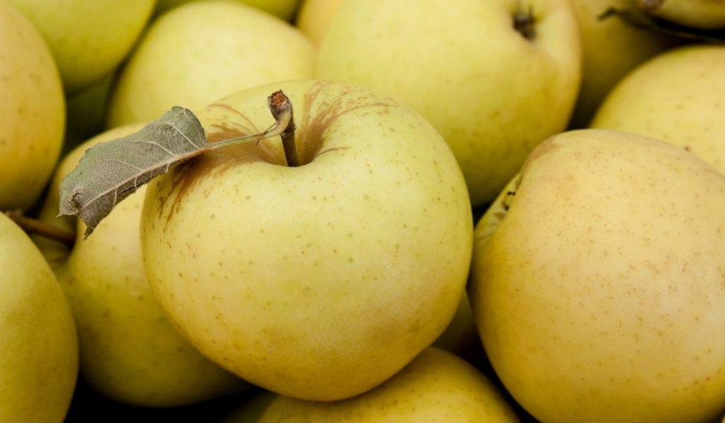 Golden Supreme apple