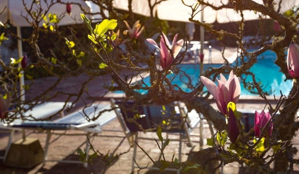 Magnolia Tree at pool
