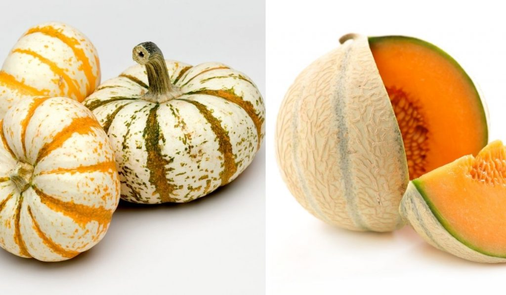 Melon and Gourds