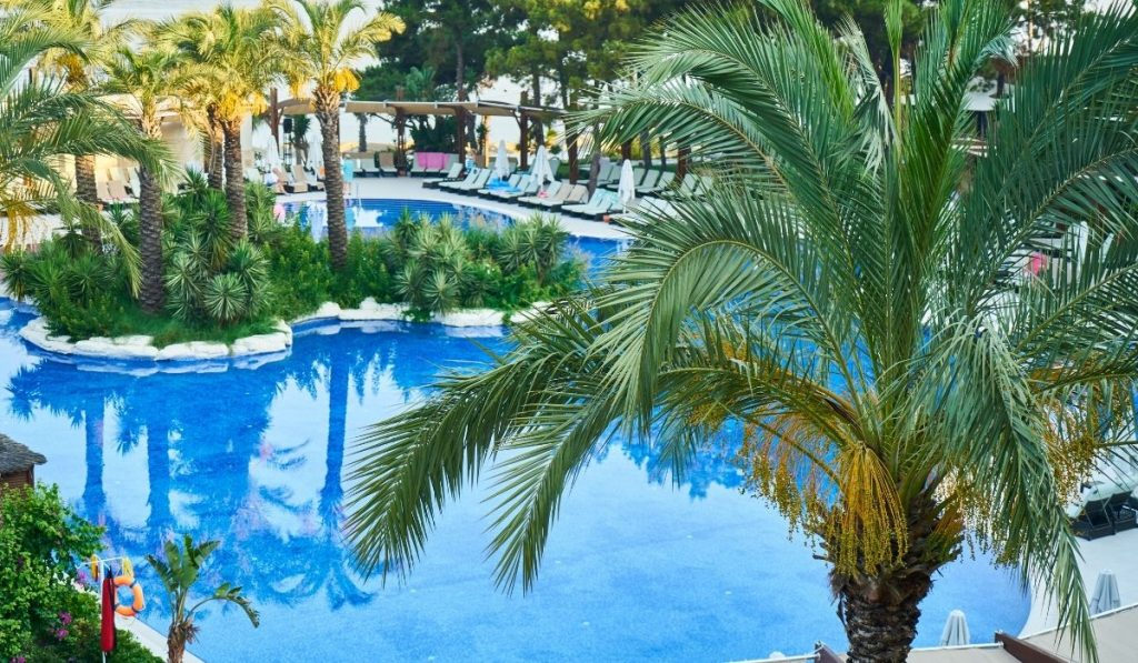 Queen Palm at swimming pool