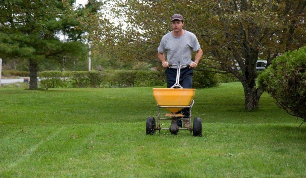 feeding fertilizer to lawn