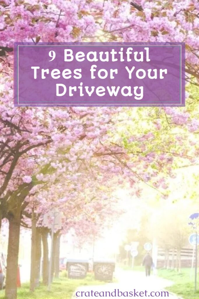 pinterest image - types of trees for a driveway