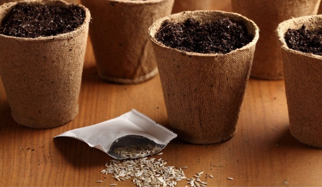 Lettuce Seeds and Planting Pots