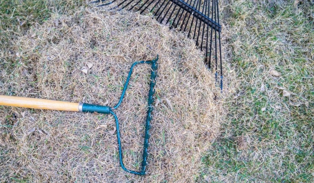 Raking Pile of Dead Grass