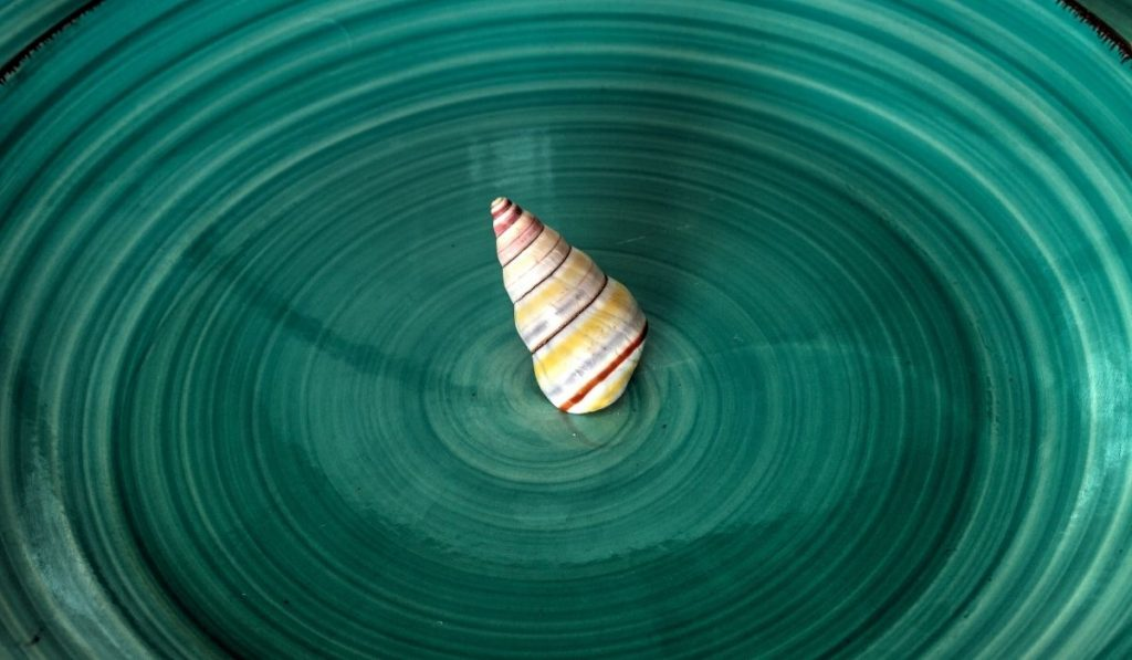 candy cane snail on a teal plate