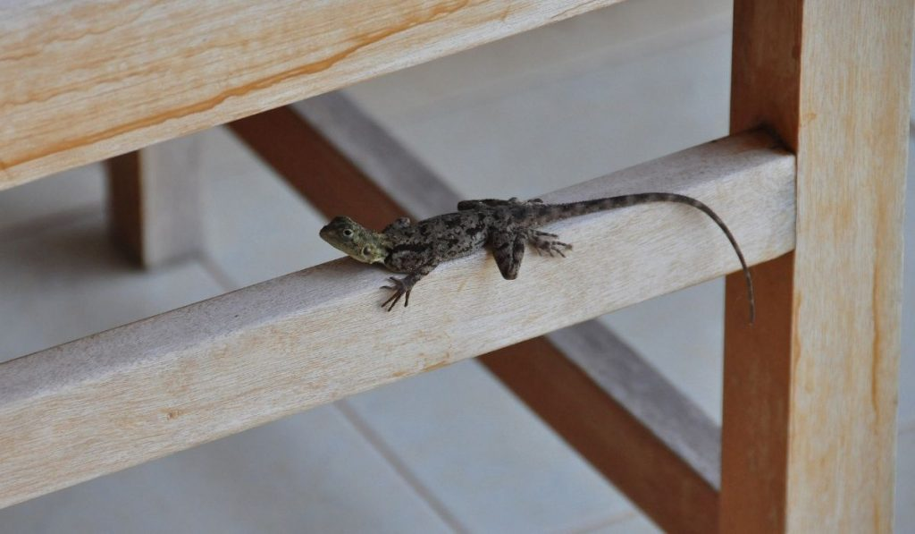 lizard on a wooden bed stand