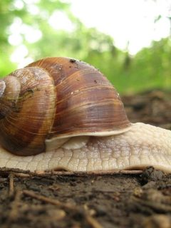 roman-snail-on-the-ground