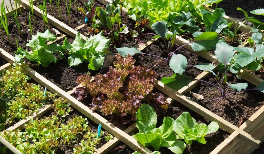 well maintained vegetable garden