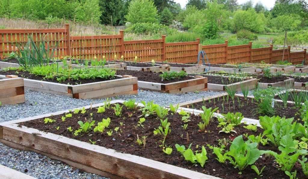 raised bed gardens on a cascade hill slope