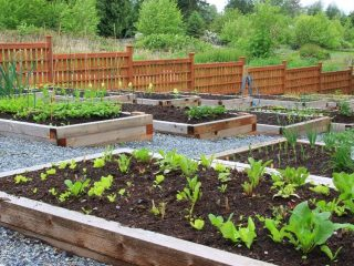raised-bed-gardens-on-a-cascade