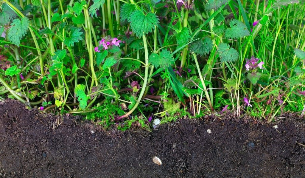 topsoil with plants growing on top of it