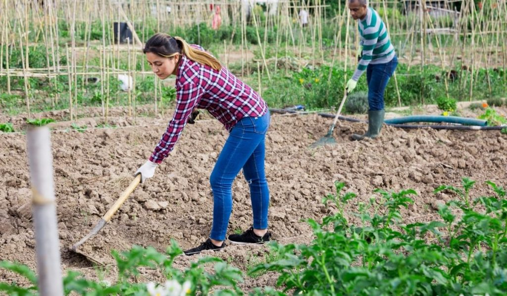woman checkered shirt and man in striped shirt tilling the soil