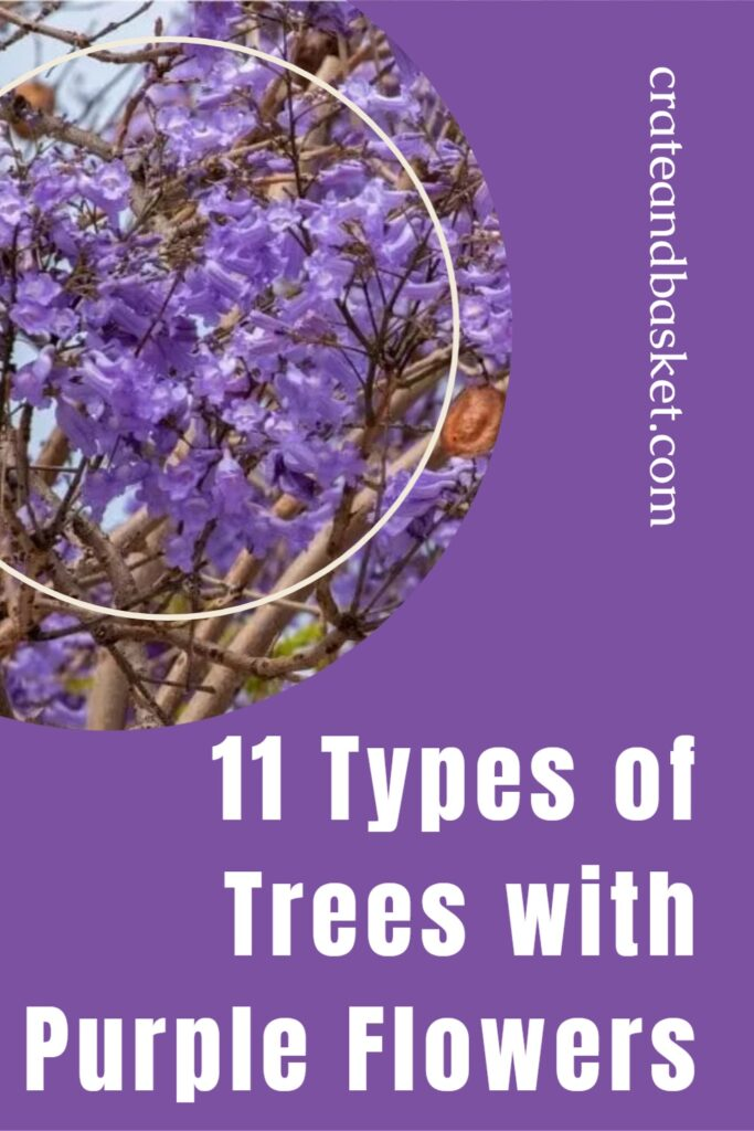 types of trees with purple flowers - pinterest image