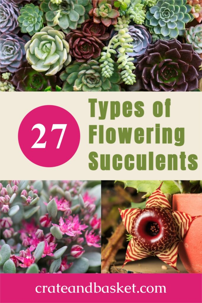 Pinterest pin - Types of Flowering succulents