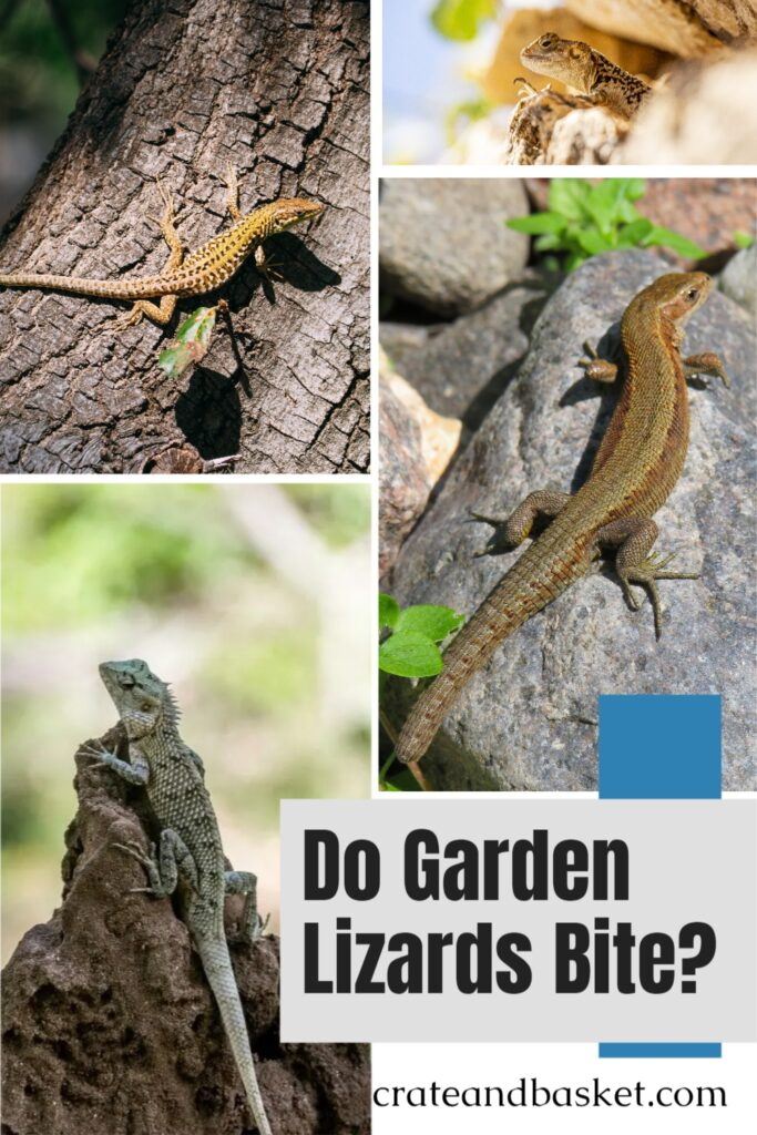 do garden lizards bite - pinterest iamge
